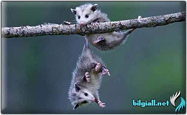 ilginc-savunma-taktikleri-olan-hayvanlar