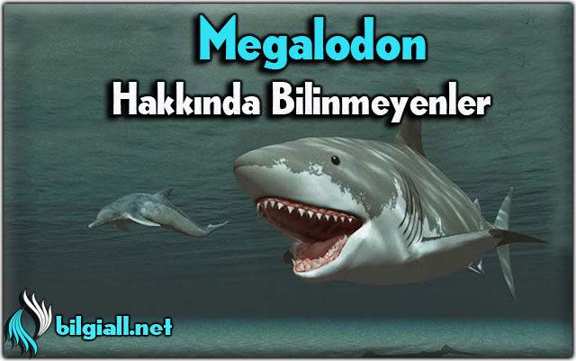 megalodon-kopekbaligi; megalodon-disi;