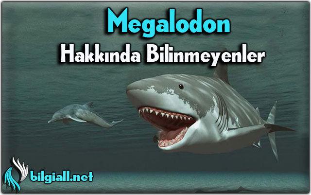 Megalodon Hakkinda Bilinmeyenler Bilgiall