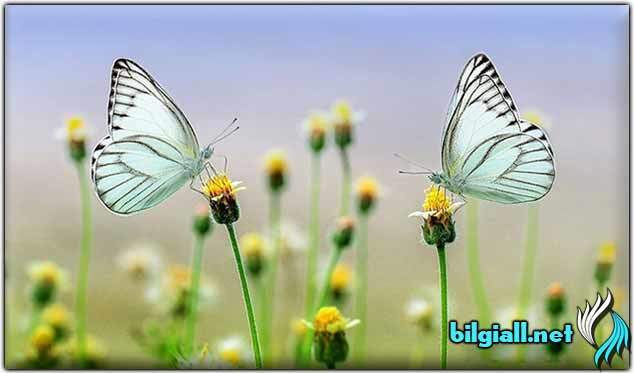 kelebek-etkisi;kelebek-etkisi-nedir;kelebek-etkisi-teorisi