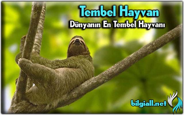 tembel-hayvan;dunyanin-en-tembel-hayvan;tembel-hayvanin-adi