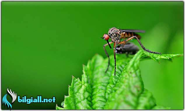 sivrisinek-kovucusu;sivrisinek-neye-gelmez;sivrisinekten-nasil-korunulur;sivrisinek-isirigi