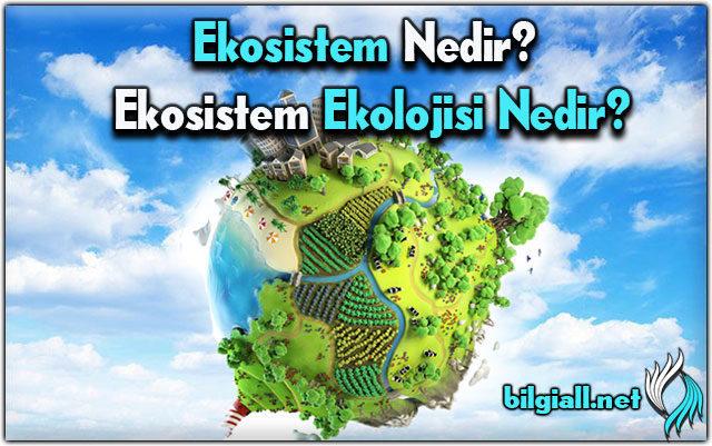 ekosistem;ekosistem-nedir-ekosistem-ekolojisi;ekosistem-ne-demek;ekosisteme-ornek